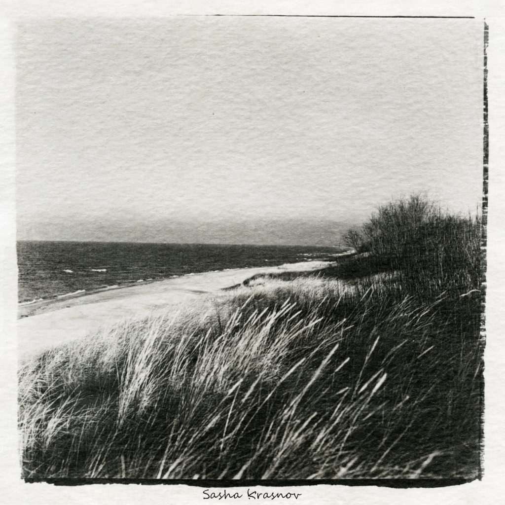 Old grass, Curonian Spit // Photography print © Sasha Krasnov