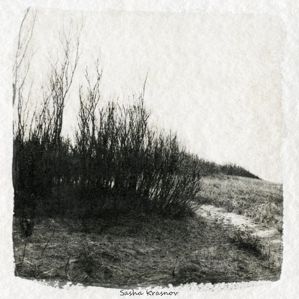 Shrub, Curonian Spit // Photography print © Sasha Krasnov